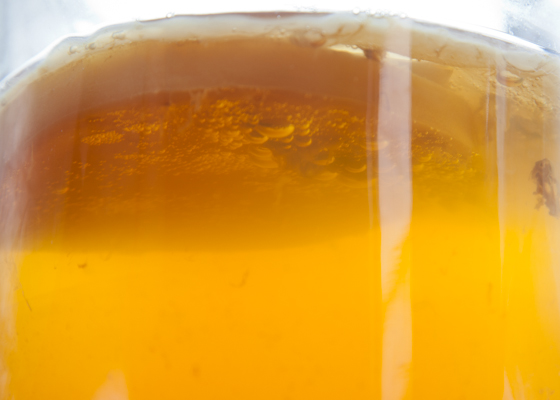 Kombucha & SCOBY Fizzy Air Bubbles